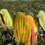 Terres Neuves Consulting women picking cotton Fund Selection